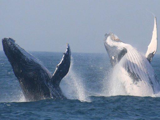 2-whales-jump-tour