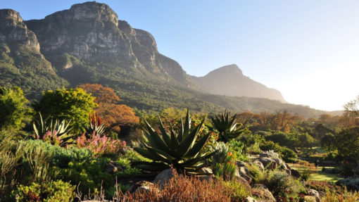 Kirstenbosch-National-Botanical-Garden-mountain