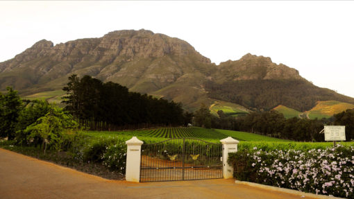 Thelema-Mountain-Vineyards