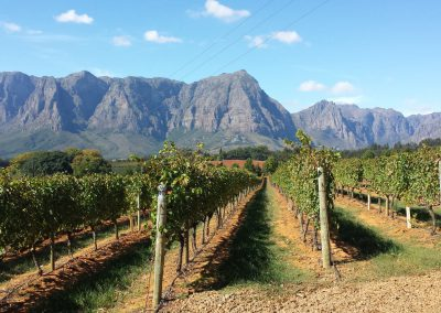 francshoek-cape-wine-vineyard-tours