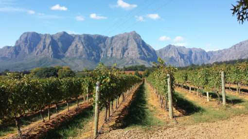 francshoek-cape-wine-vineyard-tours