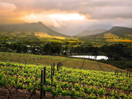 franschoek-mountain-vineyard