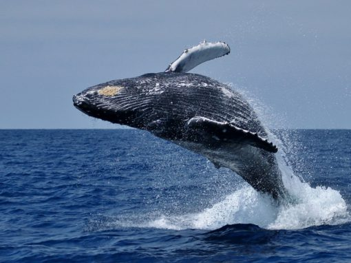 whale-watching-tour