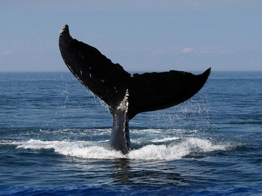 whale-watching-tale-tour