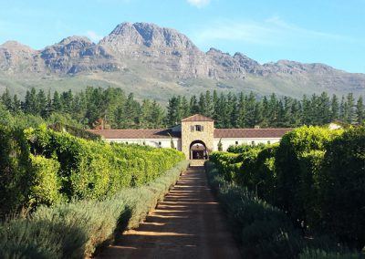 wine-estate-stellenbosh