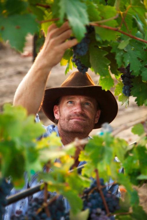 wine-vineyard-grapes-pick-tour